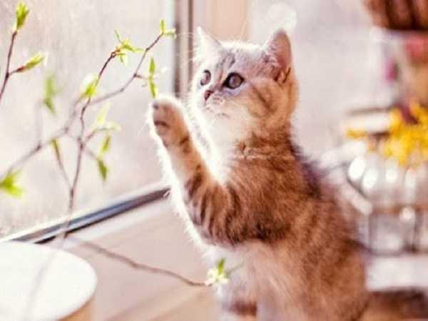 Mơ thấy bị mèo cắn nên đánh con số nào?