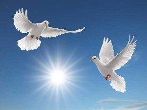Nằm mơ thấy chim bồ câu mang điềm báo gì, đánh số nào?