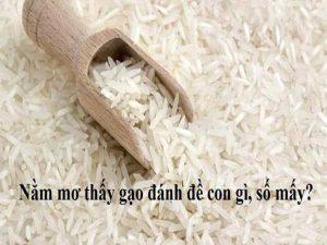 Nằm mơ thấy gạo là điềm báo gì, đánh con số mấy?
