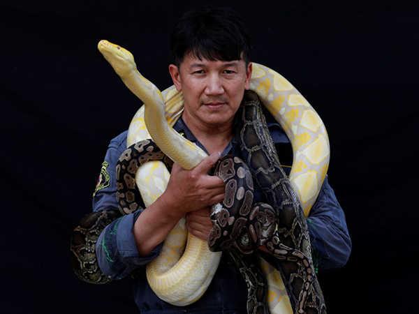Mơ bắt được rắn điềm dữ hay lành, chơi con đề nào chuẩn?