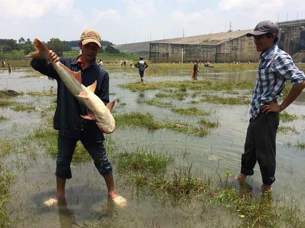 Mơ thấy bắt cá đánh con gì trúng lớn?