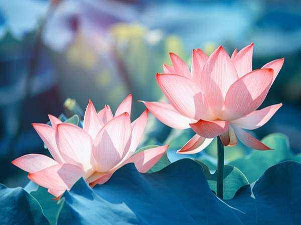 Chiêm bao thấy hoa đánh con gì trúng lớn