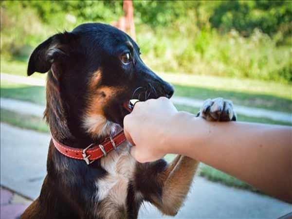 Mơ thấy chó cắn là điềm báo gì?
