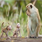 Mơ thấy khỉ là điềm báo lành hay dữ? Đánh con gì trúng lớn?