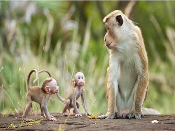Giải mã giấc mơ thấy khỉ