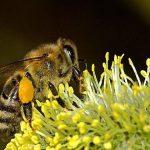 Nằm mơ thấy ong chơi xổ số con gì có điềm báo gì