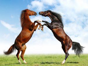 Giải mã giấc mơ thấy con ngựa là điềm báo gì