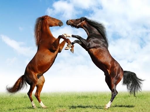 Mơ ngủ thấy 1 đàn ngựa hoang